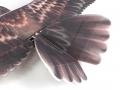 eagle_epp_hobbyking_6