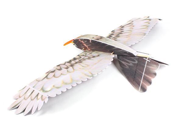 eagle_epp_hobbyking_5